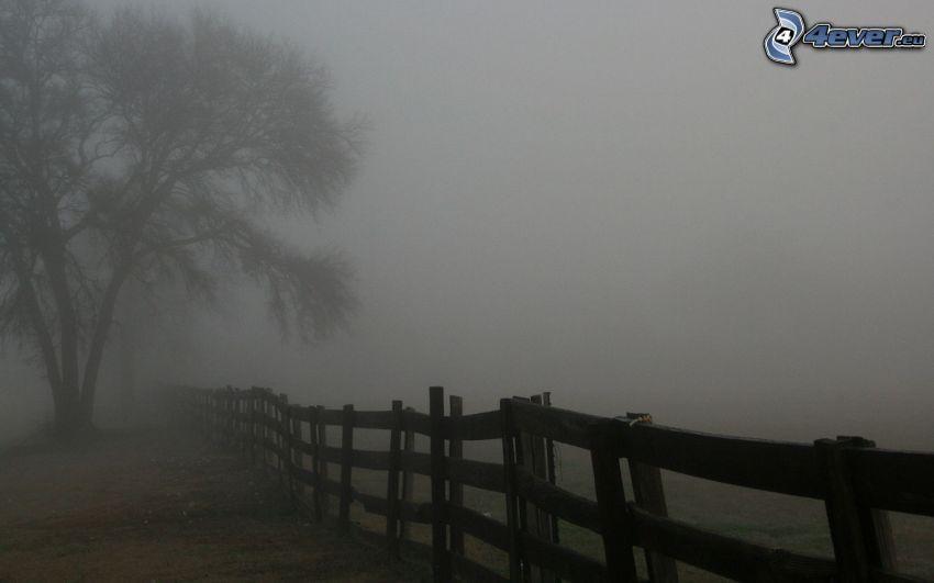 palings, tree, fog