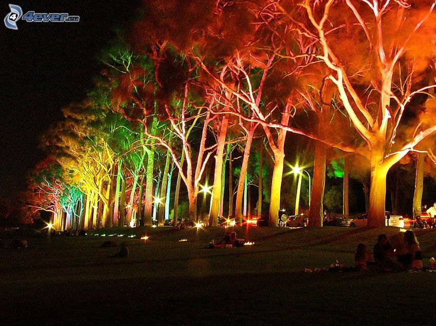 avenue of trees, colorful lightning, park, people