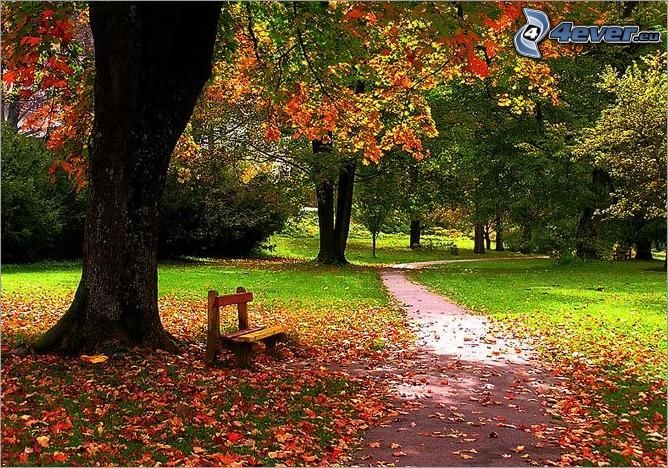 bench under the tree, autumn park, colorful leaves