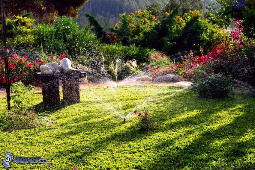 garden, flowers, sprinkler