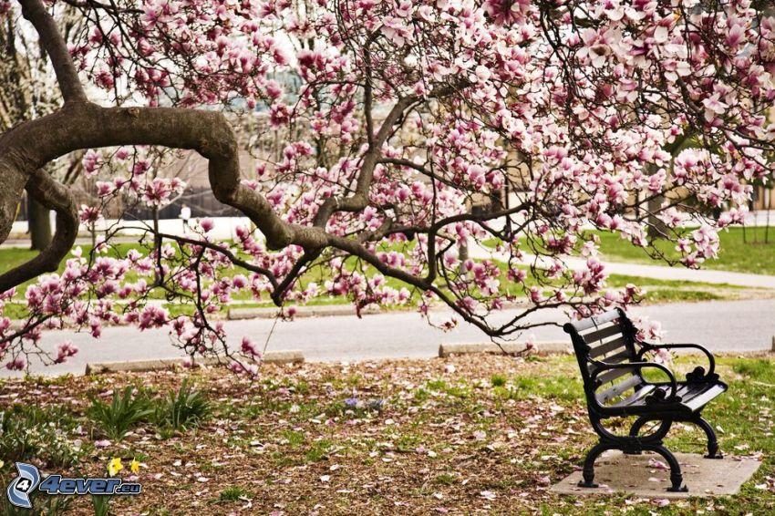 magnolia, bench