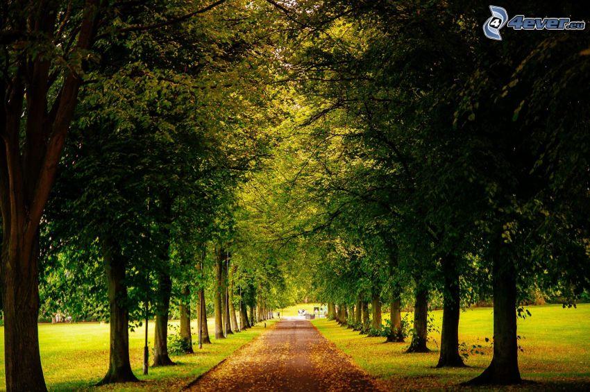 sidewalk, avenue of trees