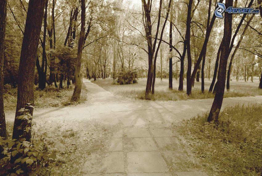 sidewalk, junction, trees, sepia