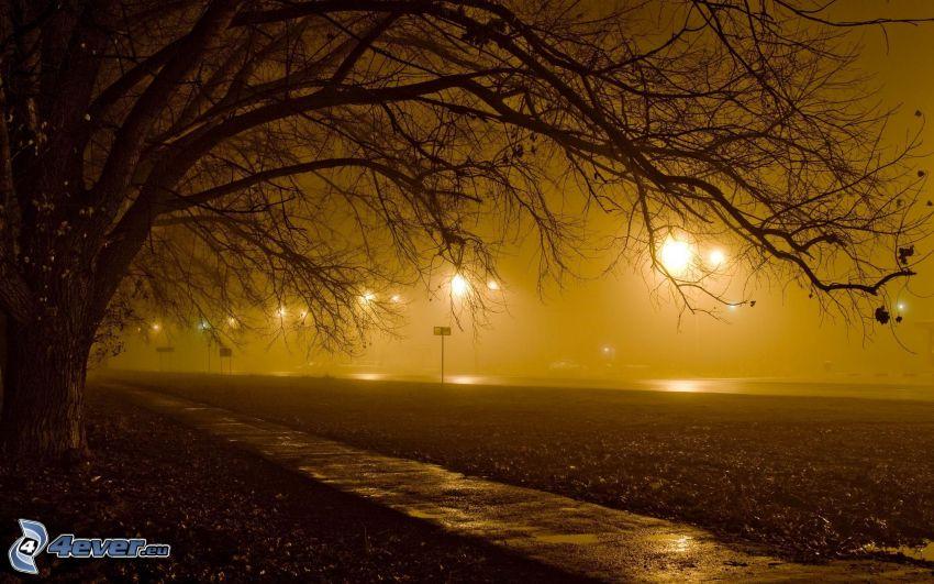 sidewalk, tree, street lights