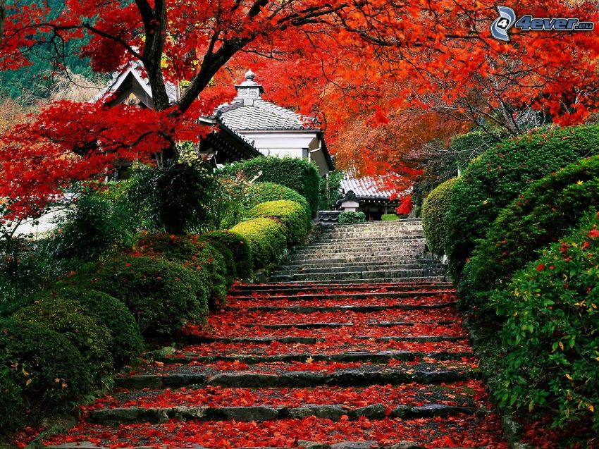 stairs, red leaves, colorful autumn trees, park, houses