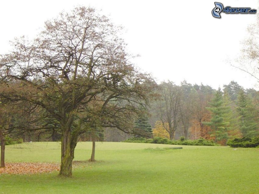 trees in park, lawn, forest