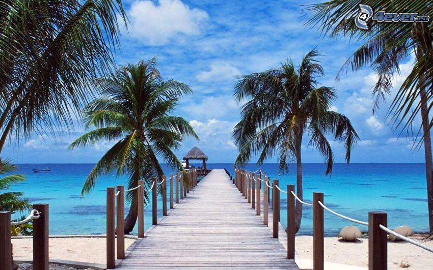 pier, palm trees, sea