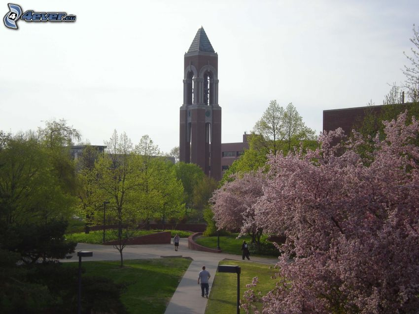 Shafer Tower, bell tower, park
