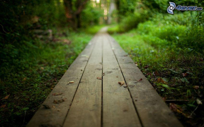 sidewalk, boards, greenery