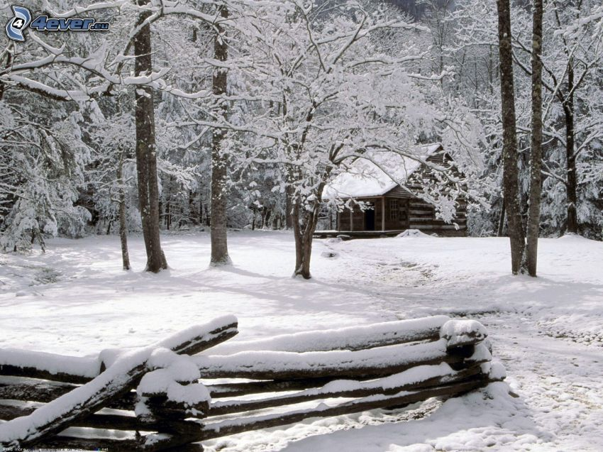 snowy cottage, snowy trees, palings