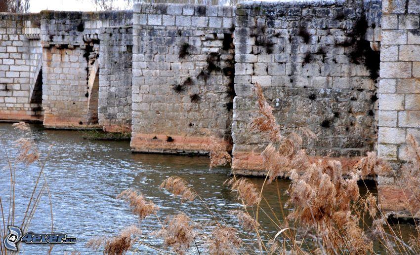 walls, River, blades of grass