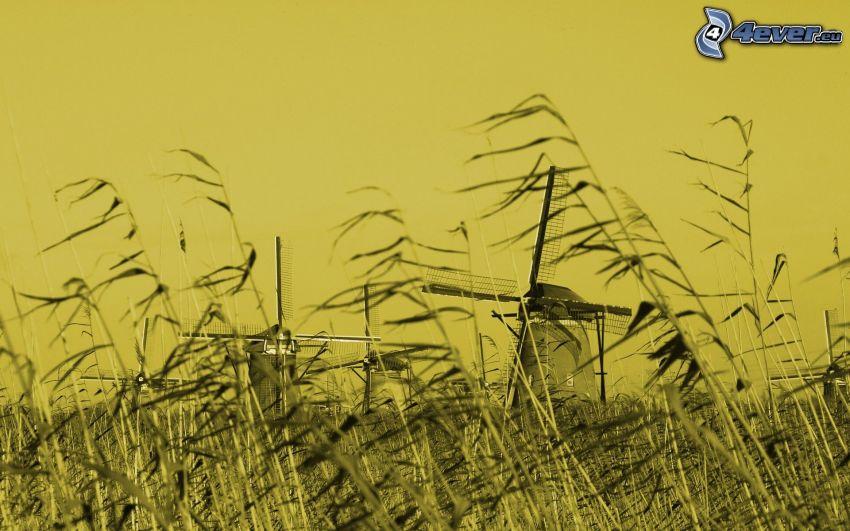 windmills, field