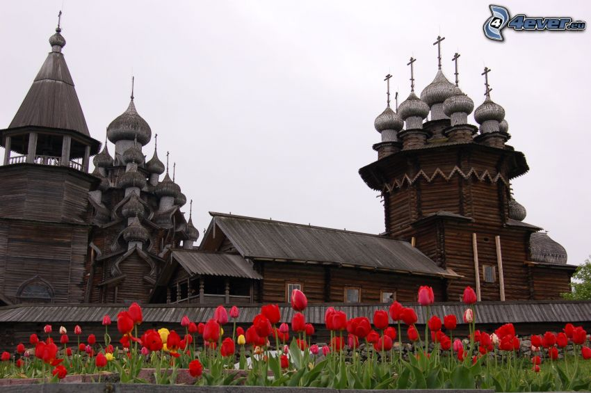 wooden church, red tulips