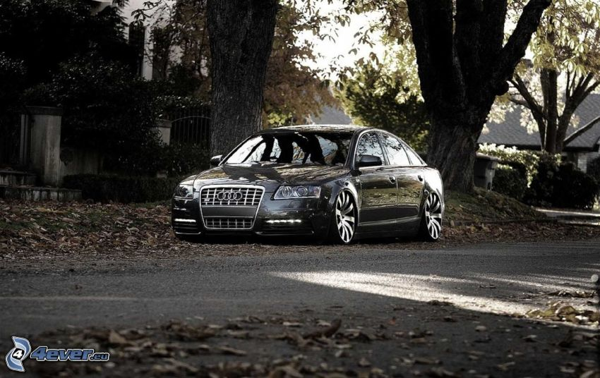 Audi S6, street, autumn leaves