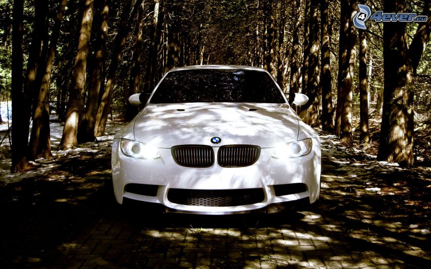 BMW, avenue of trees