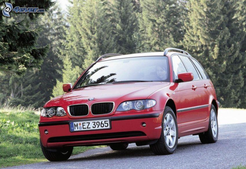 BMW 3, combi, coniferous forest