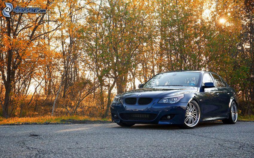 BMW 550i, autumn trees