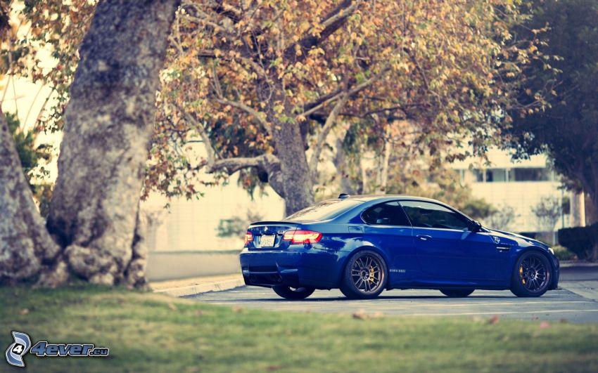 BMW M3, trees