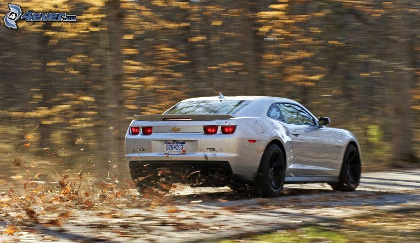 Chevrolet Camaro ZL1, autumn forest