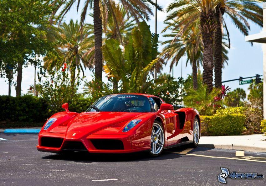 Ferrari Enzo, palm trees
