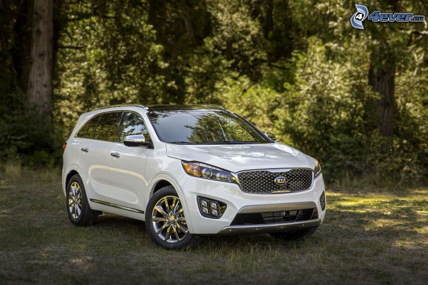 Kia Sorento, forest, greenery