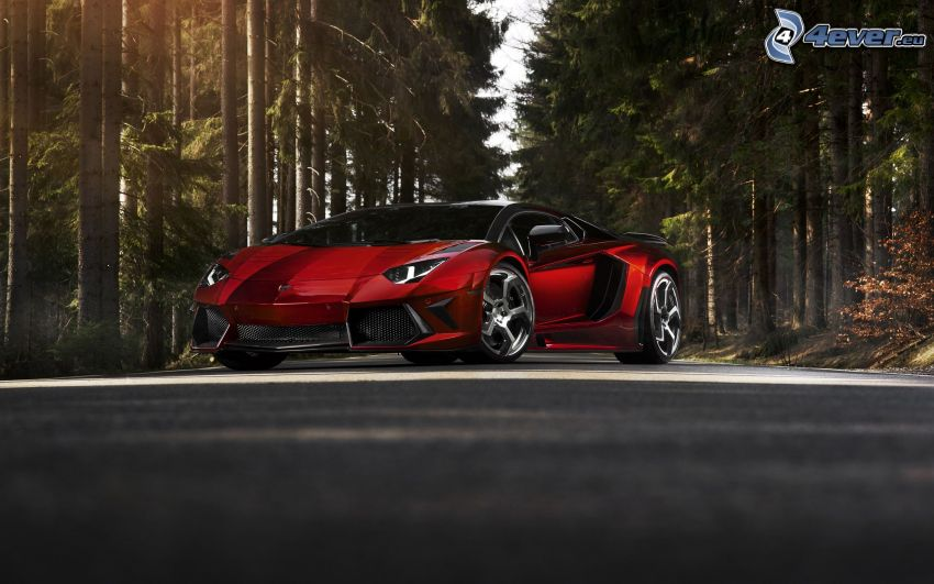 Lamborghini Aventador, coniferous forest