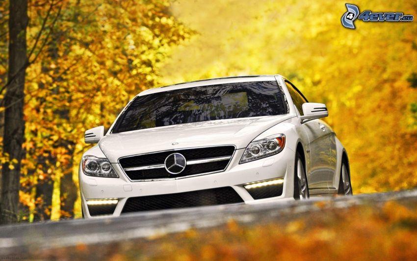 Mercedes-Benz, yellow trees