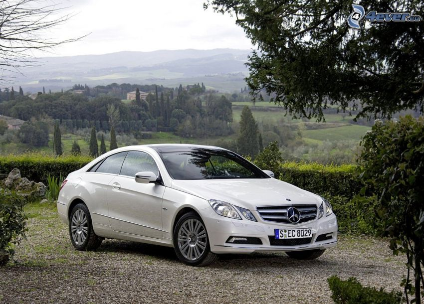 Mercedes-Benz E, view of the landscape, trees