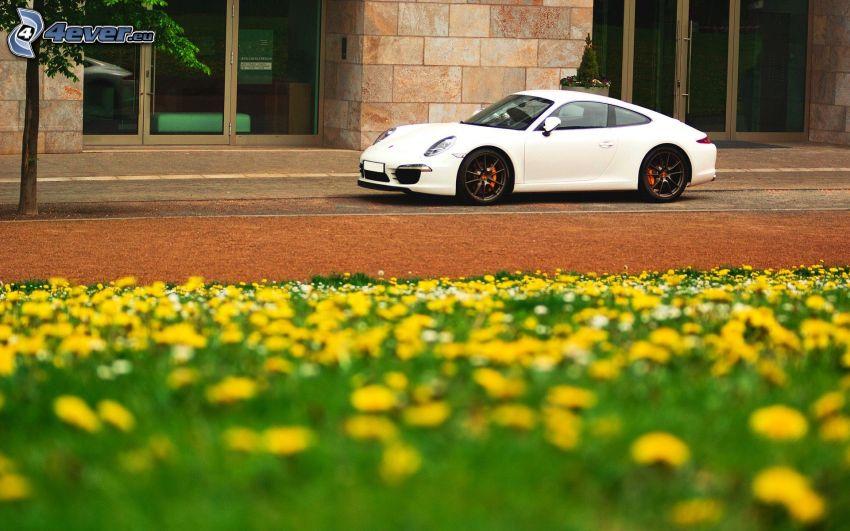 Porsche, dandelion meadow, building