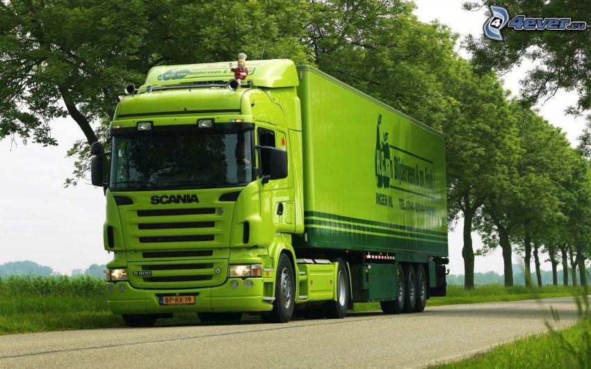 Scania, truck, road, avenue of trees