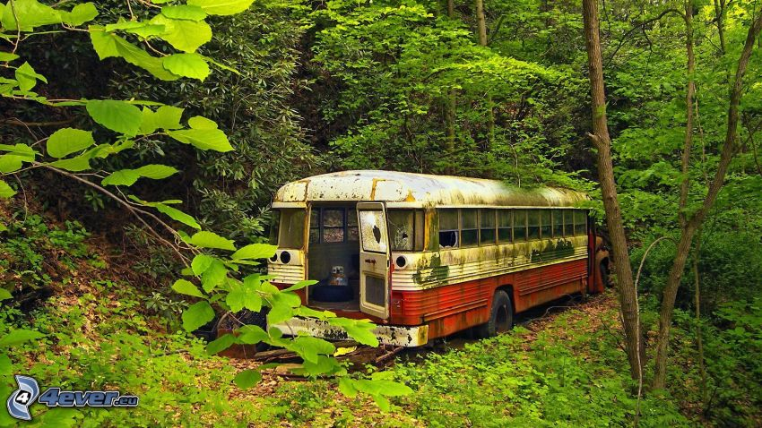 bus, wreck, forest