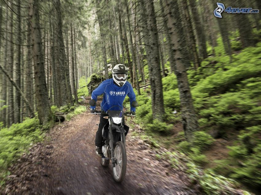 motocross, Yamaha WR125, speed, forest, forest path