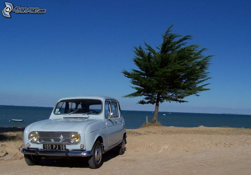 oldtimer, tree, sea, sandy beach