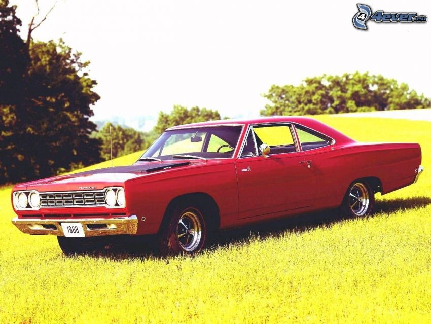 Plymouth Roadrunner, Muscle Car, meadow