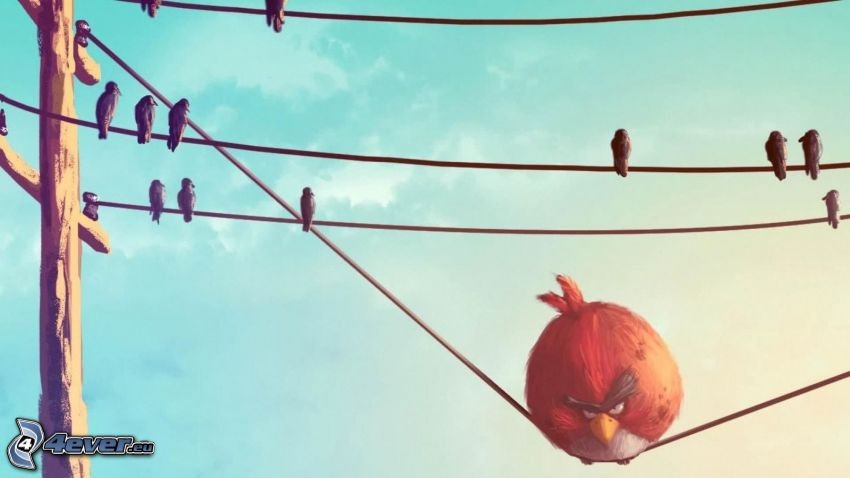Angry birds, wires, birds