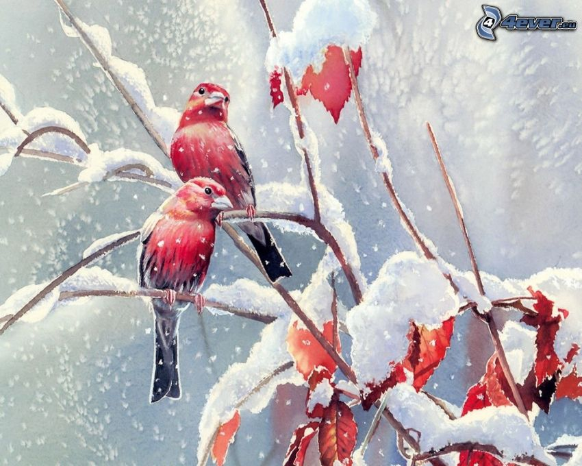 birds on a branch, snow