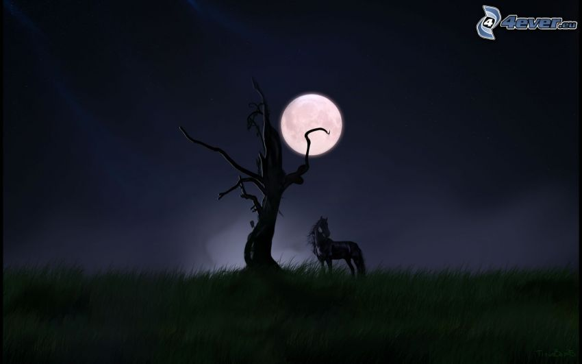 black horse, dry tree, moon, grass, night