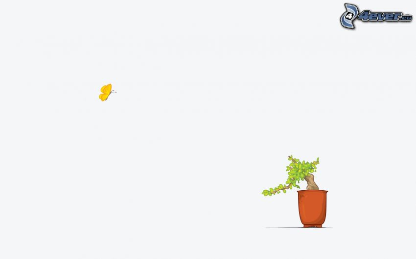 bonsai, butterfly