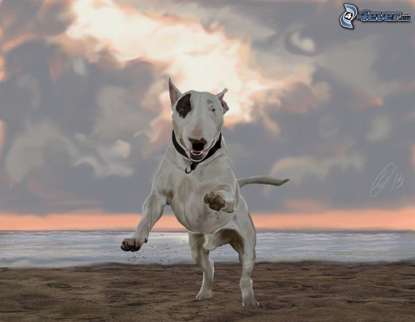 bull terrier, sea, sandy beach, clouds
