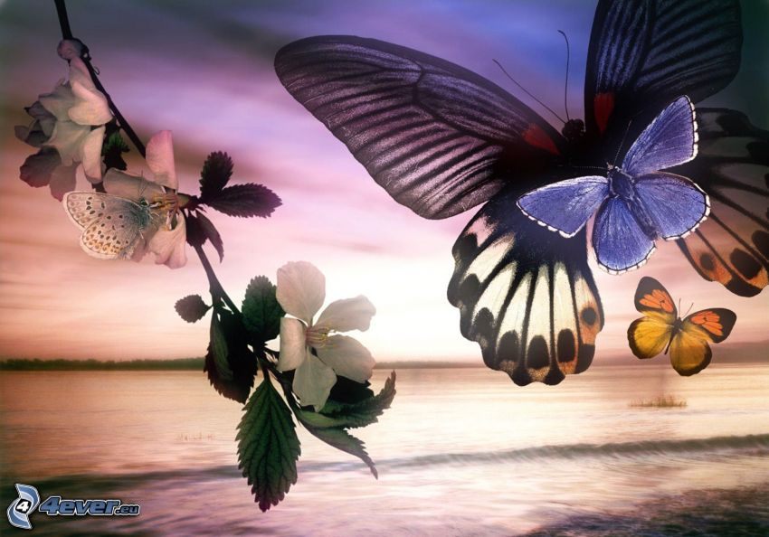 butterflies, flowering twig