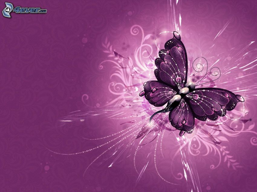 butterfly, white lines, purple background