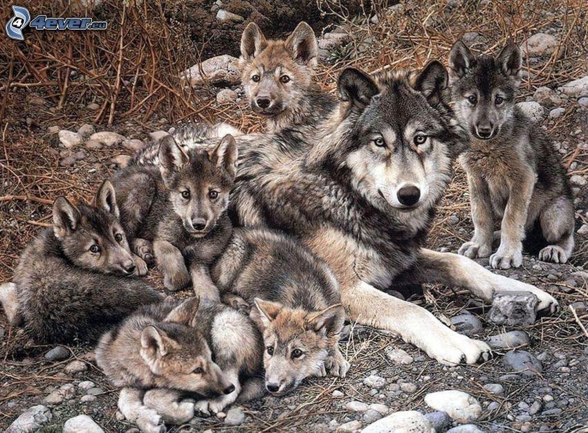 cartoon wolves, cubs