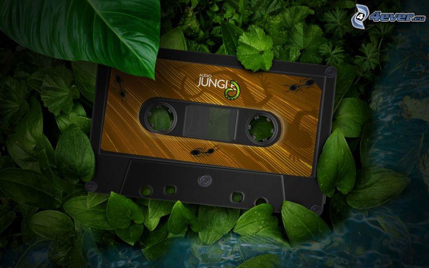 cassette, ants, leaves