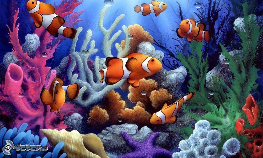 clownfish, corals, shell