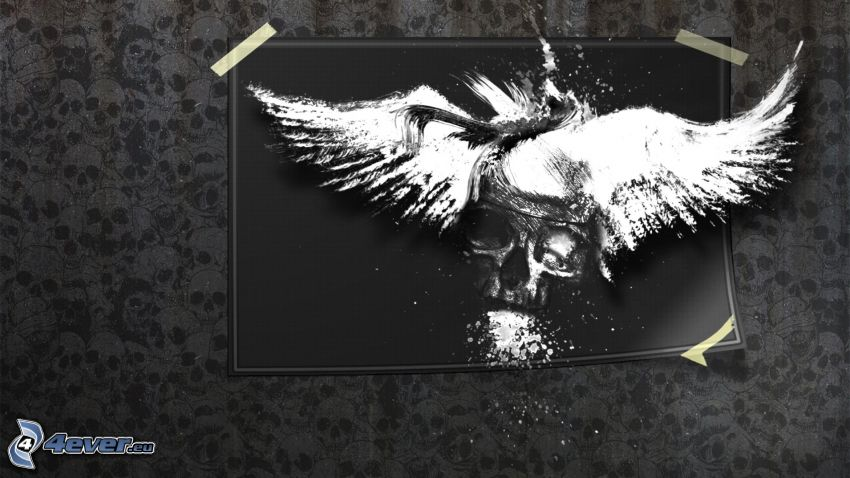 skull, white wings, picture, black and white