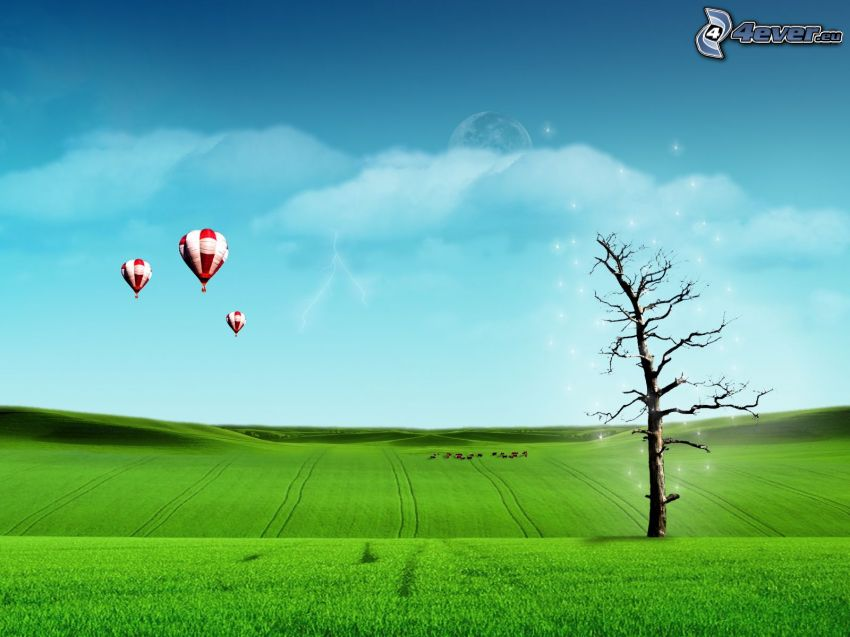balloons, green meadow, tree over the field, dried tree