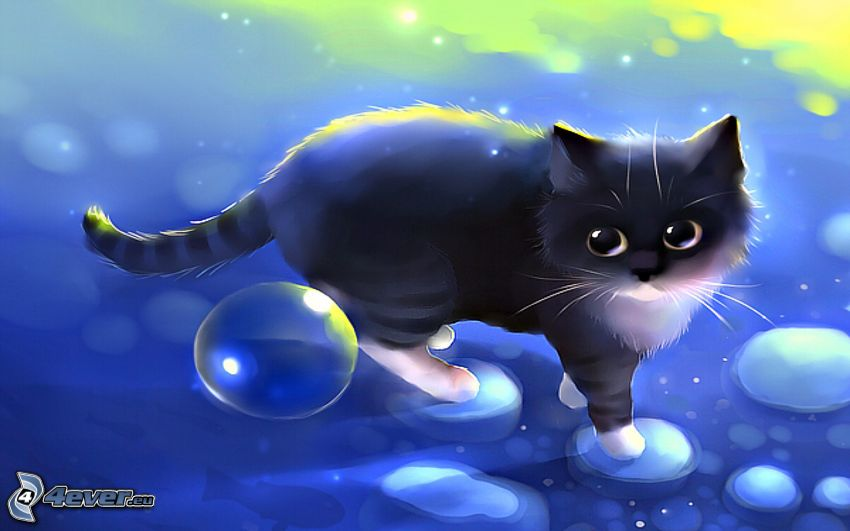 black cat, bubbles