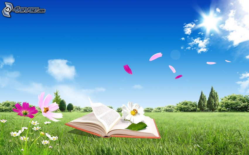 book, meadow, sun