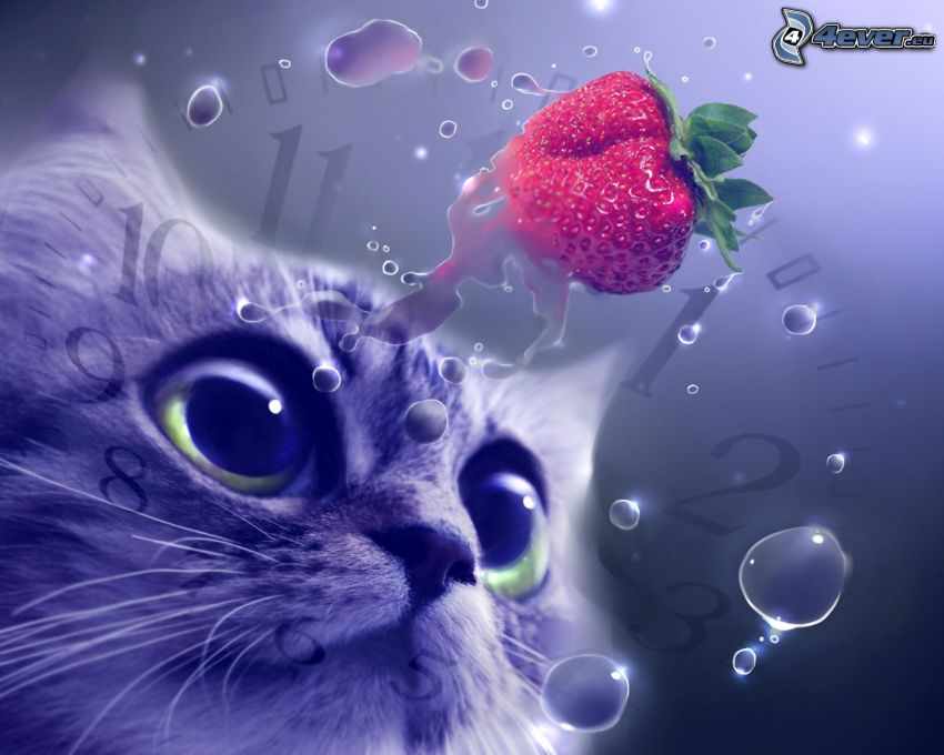 cat's look, strawberry, clock