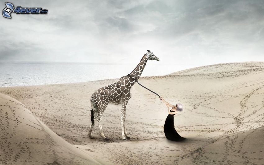 giraffe, woman, collar, sandy beach